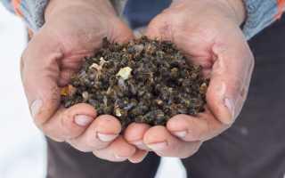 Пчелиный подмор для мужчин: применение, лечебные свойства