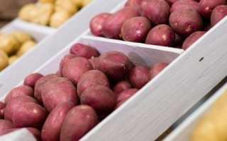 Лучшие сорта картофеля для средней полосы России — самые вкусные и урожайные