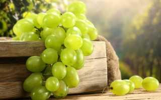Вино из зеленого винограда — рецепт приготовления в домашних условиях
