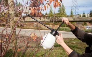 Осенняя обработка плодовых деревьев от болезней и вредителей