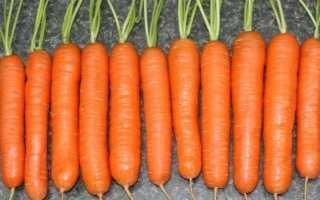 Ранние сорта моркови: описание с фото, отзывы