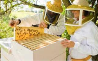 Уход за пчелами с нуля — быть пасеке или не быть