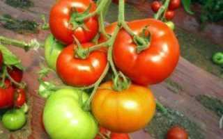 Пасынкование томатов в теплице: схема пошаговых работ своими руками с видео