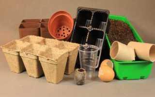 В чем выращивать рассаду? Выбираем ёмкости для рассады, какие лучше подходят для выращивания рассады