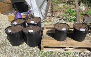 Какие удобрения нужны для огурцов? Удобрения для огурцов в открытом грунте и в теплице