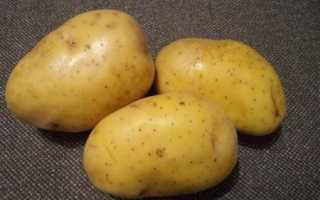 Картофель — Крона — (21 фото): описание и характеристика сорта, вкусовые качества и отзывы