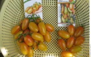 Описание, характеристика, посев на рассаду, подкормка, урожайность, фото, видео и самые распространенные болезни томатов сорта «Медовые пальчики F1»