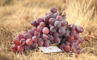 Виноград Атаман: описание сорта, фото, отзывы