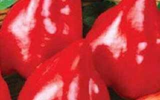 Перец Бычье сердце: описание, фото, отзывы