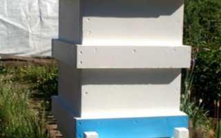 Ульи из пенополистирола (ППС): отзывы пчеловодов, чертежи