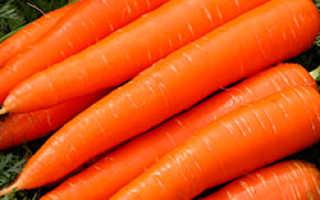 Морковь сластена: отзывы, фото, урожайность — eТеплица