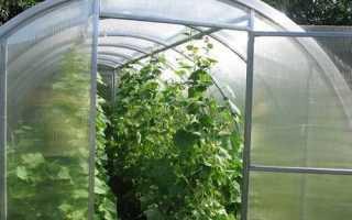 Как ускорить рост огурцов в теплице