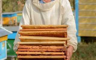 Сушь для пчел: что это такое