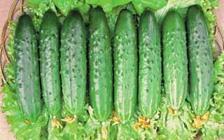 Огурец — Зозуля: характеристика и описание сорта, фото, отзывы, выращивание в теплице