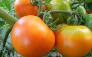Томат Гусиное яйцо: характеристика и описание сорта, урожайность с фото