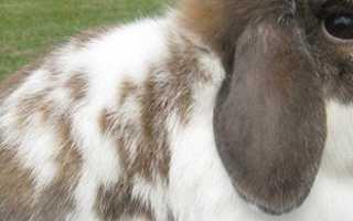 Какие породы кроликов больше всего подойдут для разведения