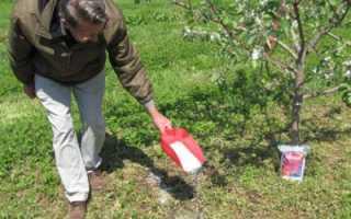 Правильная подкормка деревьев и кустарников весной