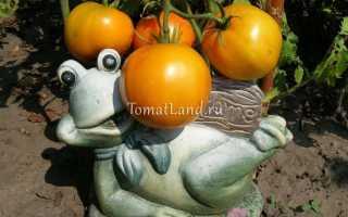 Томат Апельсин, описание сорта, отзывы, фото, характеристика