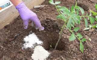 Как применять суперфосфат для помидор