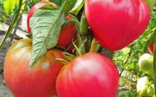 Лучшие сорта томатов для Подмосковья — советы дачников