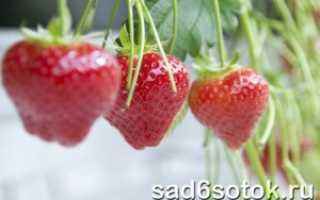 Выращивание клубники в теплице — первый урожай в мае