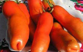 Томат аурия: описание сорта, выращивание, отзывы