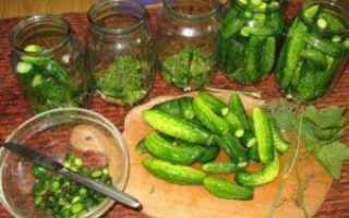 Маринованный дайкон: рецепты приготовления на зиму в домашних условиях с фото