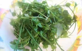 Польза и вред сорняков на дачном участке: хорошая и плохая сорная трава