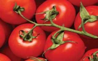Томат Спецназ: описание сорта, урожайность и характеристики с фото