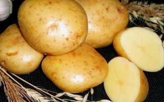 Сорт картофеля Гала — отзывы