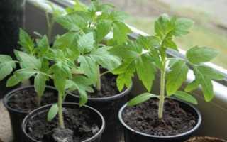 Подкормка рассады помидоров: удобрения, виды, основные правила процесса подкормки томатов в домашних условиях
