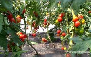 Сорта огурцов для краснодарского края, Вырасти сад!