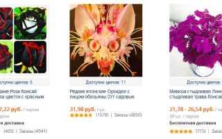 Лучшие сорта клубники для Московской области — мои отзывы, Сайт о саде, даче и комнатных растениях
