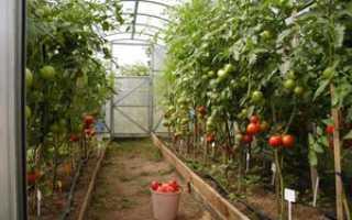 Подкормка томатов: первая подкормка помидоров после высадки в теплицу
