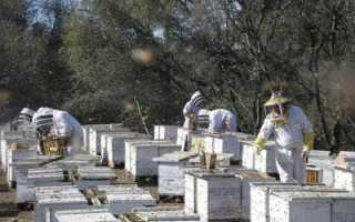 Промышленное пчеловодство — что необходимо? Товары для пчеловодства