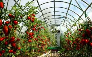 Выращивание помидоров в теплице – секреты обильного урожая, На грядке ()