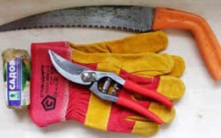 Как правильно подготовить малину к зиме — пошаговая инструкция