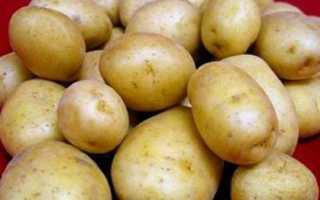 Картофель Голубизна: описание, сорта, фото, отзывы