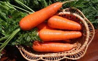 Морковь Мармелад F1: описание, фото, отзывы