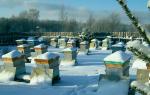 Как зимуют пчелы в улье: подготовка к зиме