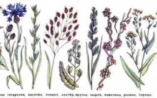 Гербицид Глидер — описание препарата и инструкция по применению
