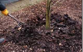 Чем подкармливать яблони осенью и как ее удобрять, выбор удобрений для осенней подкормки