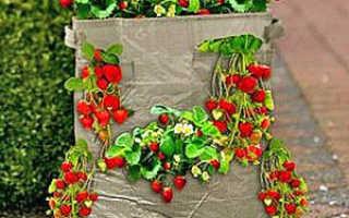 Как правильно выращивать клубнику в мешках? видео