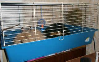 Клетки для карликовых и декоративных кроликов