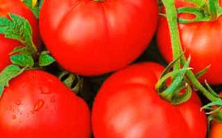 Томат — Жонглер — F1, Характеристика и описание сорта, урожайность, фото