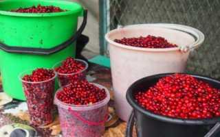 Как приготовить брусничный джем на зиму – пошаговый рецепт джема из брусники в домашних условиях — Сусеки