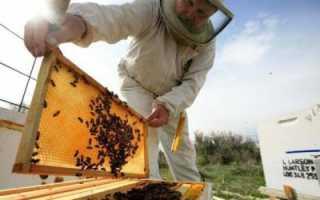 Как сделать отводок пчел: пошаговая инструкция