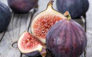 Как хранить инжир правильно и хранение инжира сушеного и свежего в домашних условиях