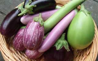 20 лучших сортов баклажан для открытого грунта и теплицы