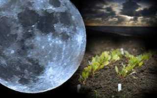 Посев баклажанов на рассаду по лунному календарю: полезные советы, благоприятные дни для посадки семян и когда сажать запрещено